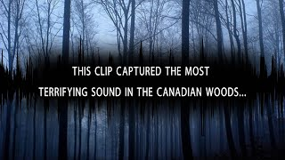 5 Scary Unexplained Sounds Recorded From The Woods