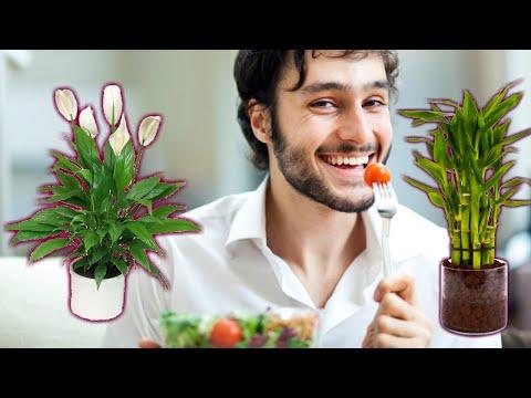 7 растений талисманов, которые привлекают счастье и удачу в ваш дом   Я знаю