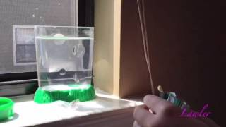 Sea Monkeys EP.2