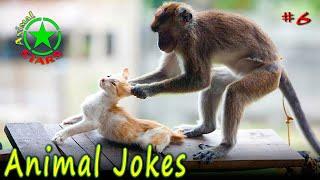 Animal Jokes Funny Dogs Cute Cats Amazing Pets Funny Jokes 2020 №6