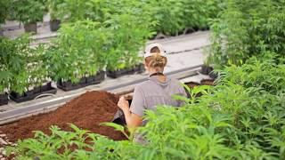 Syracuse group flips New York marijuana license for millions