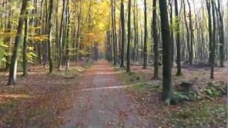 preview picture of video 'Fahrt durch die herbstliche Brandheide'