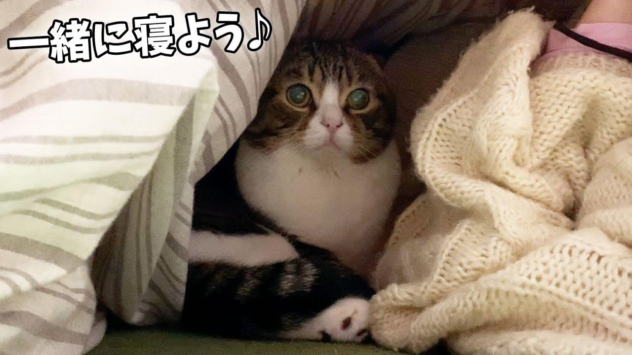 お布団の中に可愛い侵入者が!【パパ猫・子猫】