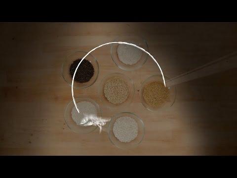 úgynevezett férgek, amelyek hasonlóak a rizshez helminthiasis kezelés megelőző gyógyszerei