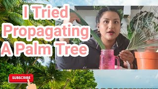 Can A Palm Tree Be Propagated from cuttings? See My Results -Rubys Plants