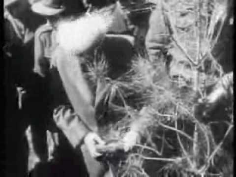 תיעוד מרתק בשחור לבן של מדינת ישראל בשנת 1950