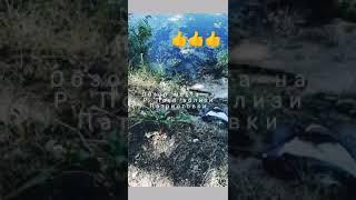 Клев рыбы в косовщине сумы