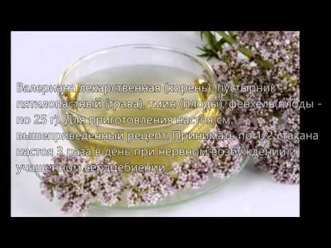 Настойка валерианы рецепты применения и лечения