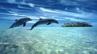 Dolphin dreams ? Melody oceans ? Zen and Relaxation ?