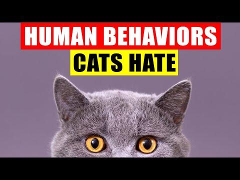 18 Common Human Behaviors That Upset or Harm Cats