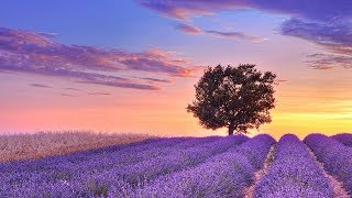 Relaxing Music for Stress Relief. Soothing Music for Sleep, Meditation, Spa