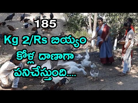 , title : 'kg 2 Rs rice useful for feeding chickens,ducks,goose only  hari babu   organic   natural