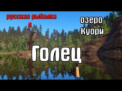 Русская рыбалка 4(рр4/rf4) - озеро куори. голец.
