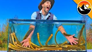 EATEN ALIVE by Sea Lamprey!
