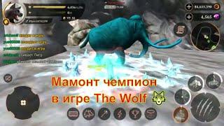 Мамонт чемпион в игре The Wolf 🐺 игра game можно смотреть мультфильмы онлайн мультики для детей