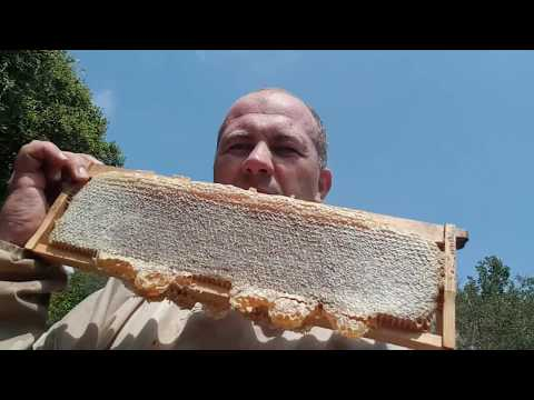 качаю первый весенний мёд 2018