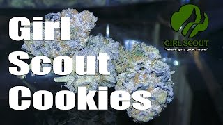 Girl Scout Cookies - BUD Review