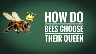 HOW DO BEES CHOOSE THEIR QUEEN