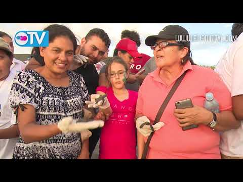 Jóvenes ambientalistas liberan tortuguillos Marinos