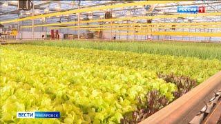 Начинающим фермерам Хабаровского края в этом году будет проще получать гранты на