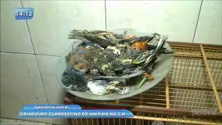 Encontrado criadouro clandestino de animais em Londrina