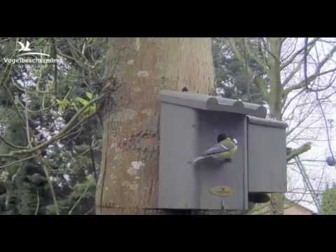 Checking Nest Box Again - 29.03.2017