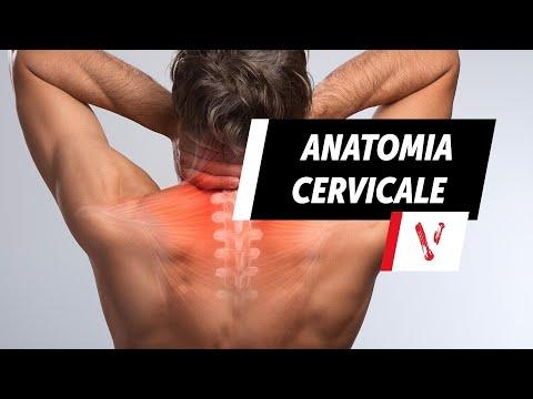 Rafforzamento dellarticolazione della spalla dopo linfortunio