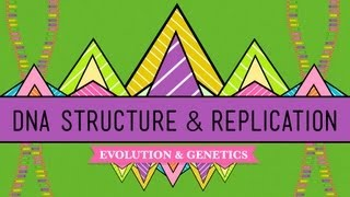 DNA Structure and Replication: Crash Course Biology #10  UPSC.GOV.IN | CIVIL SERVICES (MAIN) EXAMINATION, 2018 BOTANY PAPER - II QUESTION PAPER   #EDUCRATSWEB
