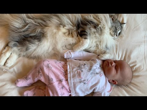 7 Stages of a Cat Befriending a Baby
