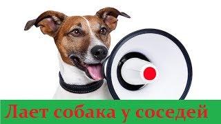 Лает собака у соседей - бесплатная консультация юриста онлайн