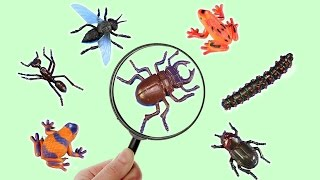 Learn About Insects and Wild Animals Names For Kids!