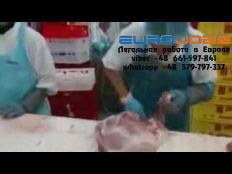 Работа в Польше в мясокомбинате EuroJobs