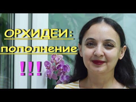 "НОВИНКА-пафиопедилум:НАРАЩИВАЮ КОРНИ во МХЕ.Цветущие ""Башмачки"" Юлии Кисловой.ОРХИДЕИ."
