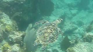 preview picture of video 'Blue Bubbles - snorkeling in Anguilla'