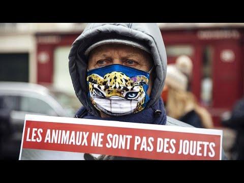 Γαλλία: «Φρένο» στην εγκατάλειψη των ζώων