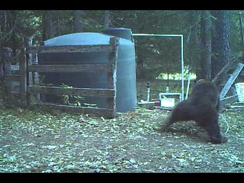 Bear gets Hit in the Nuts and Acts as Expected