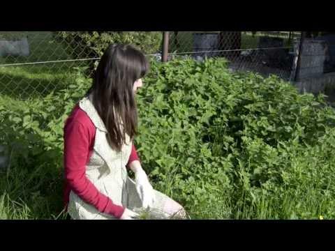 Lek ziołowy na zwiększenie potencji