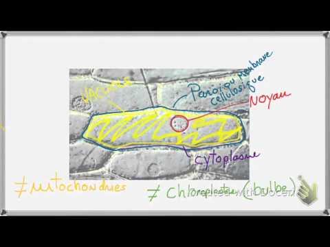 Graines de tournesol et les examens de lhypertension