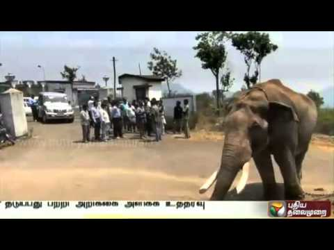 Restriction-on-Wild-Animals-Enters-Residential-areas-NHRC-orders-state-govt-Nilgiris
