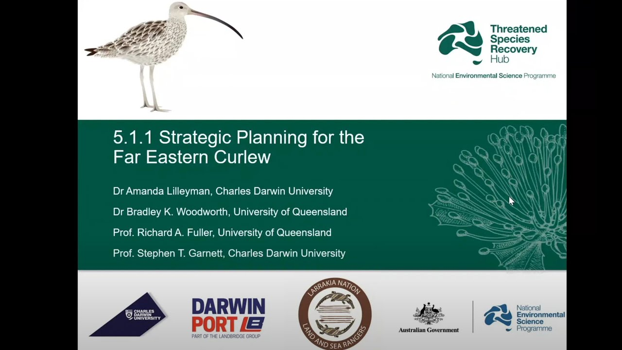 Strategic planning for the far eastern curlew