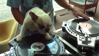 Sobaka DJ