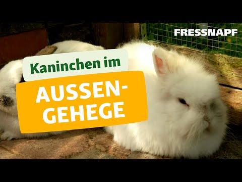 Kaninchen im Außengehege I FRESSNAPF