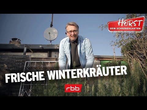 Frische Kräuter im Winter | Horst sein Schrebergarten