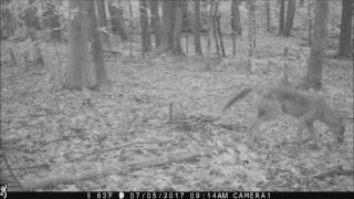 july trail camera catches