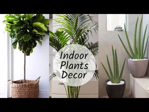 mp4 Home Decor Plants, download Home Decor Plants video klip Home Decor Plants