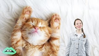 The Real Reasons Why Cats Purr