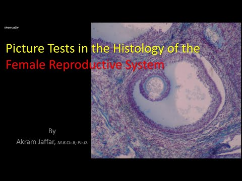 Histology Of The Female Reproductive System