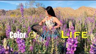 Color Of Your Life 彩色人生 - Michał Szpak (Guzheng Cover) by Mila Zeng