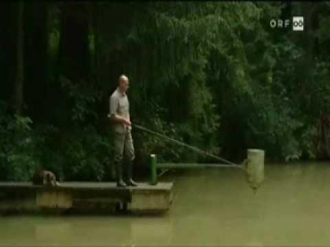 Die Reinigung des Organismus der Parasiten malachowu