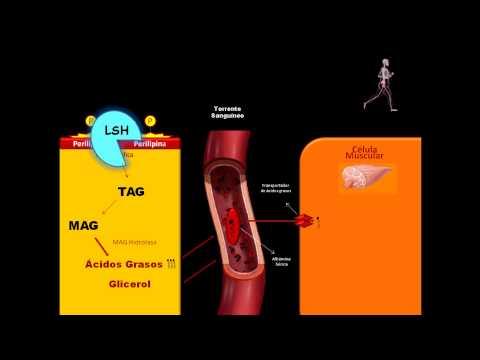 Los proteínas las grasas los hidratos de carbono en los productos de la alimentación la tabla
